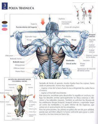 Ejercicios con barra para pecho y espalda