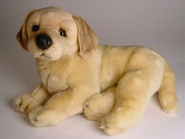 Conan Golden Retriever Dogs Golden Retriever Labrador