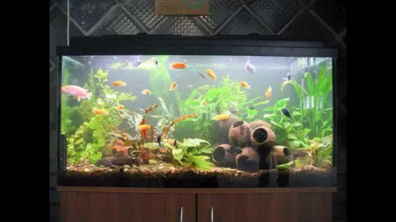 Homemade Fish Tank Decoration Ideas Inspirational Deavita Aquarium