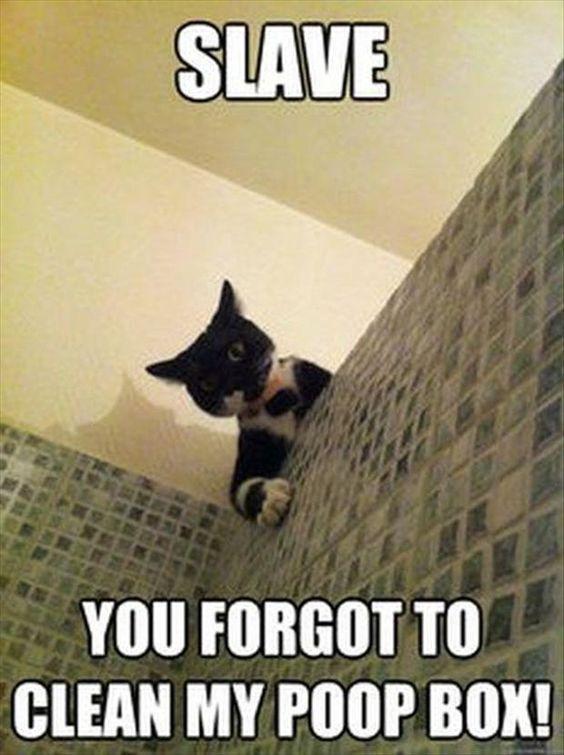 30 really hilarious cat pics kittens funny cats funny animals