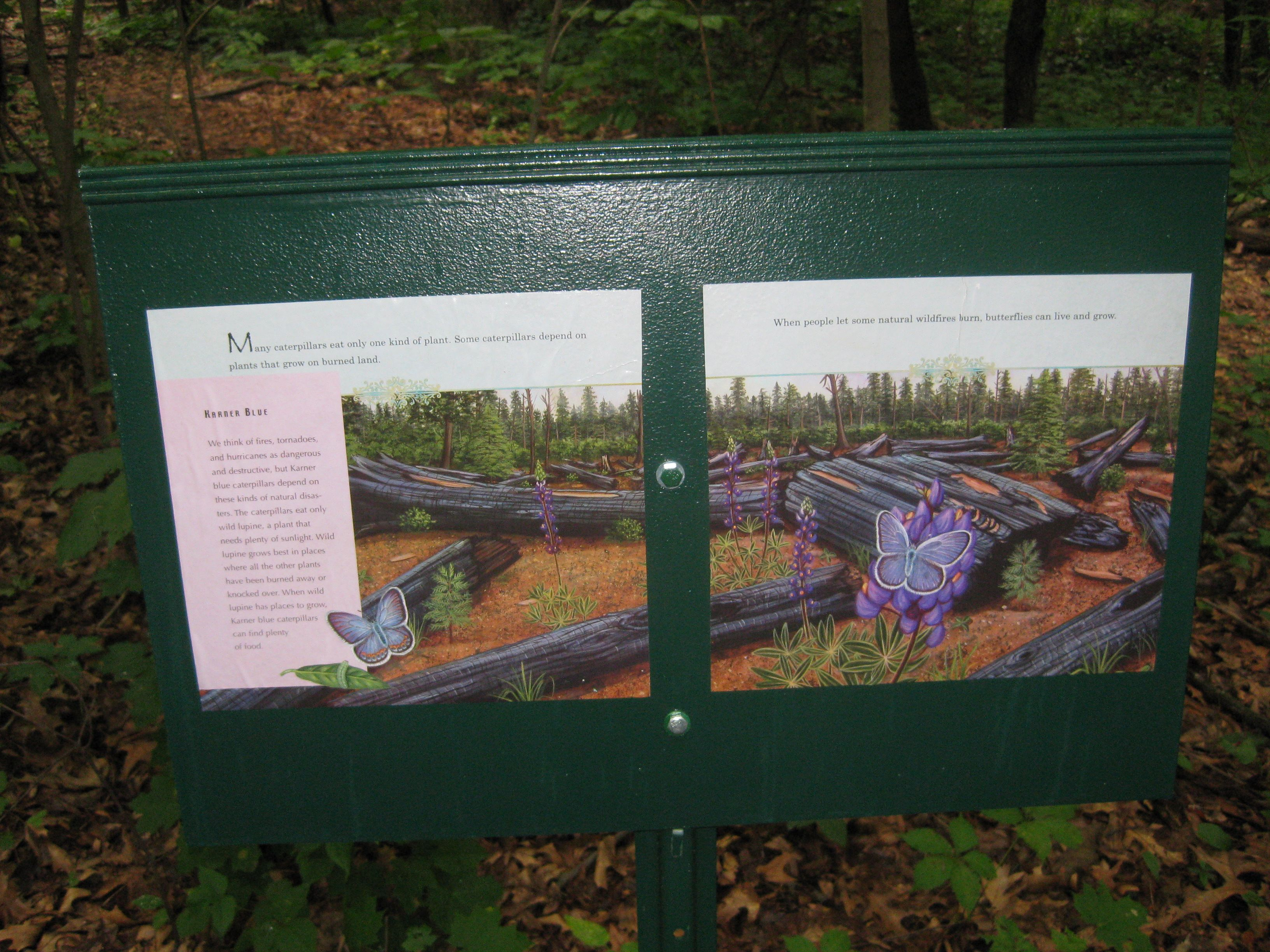 Storywalk featuring A Place for Butterflies at Broad Meadow Brook Wildlife Sanctuary in Worcester, MA.