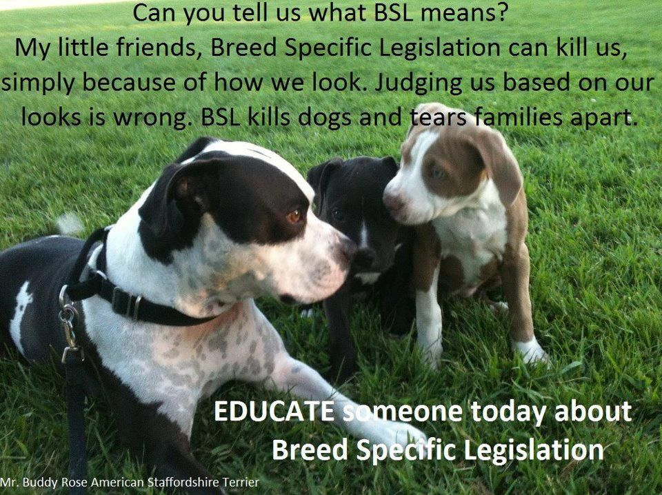 Educate Someone Today About Breed Specific Legistation What Is