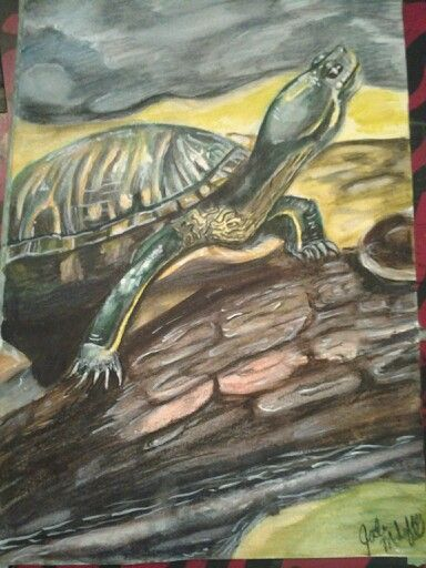 """Emerging"" 7x10 multimedia paper 98lbs Derwent Inktense pencils and white gouche My own photo reference #art #Derwent #Inktense #nature #turtles"