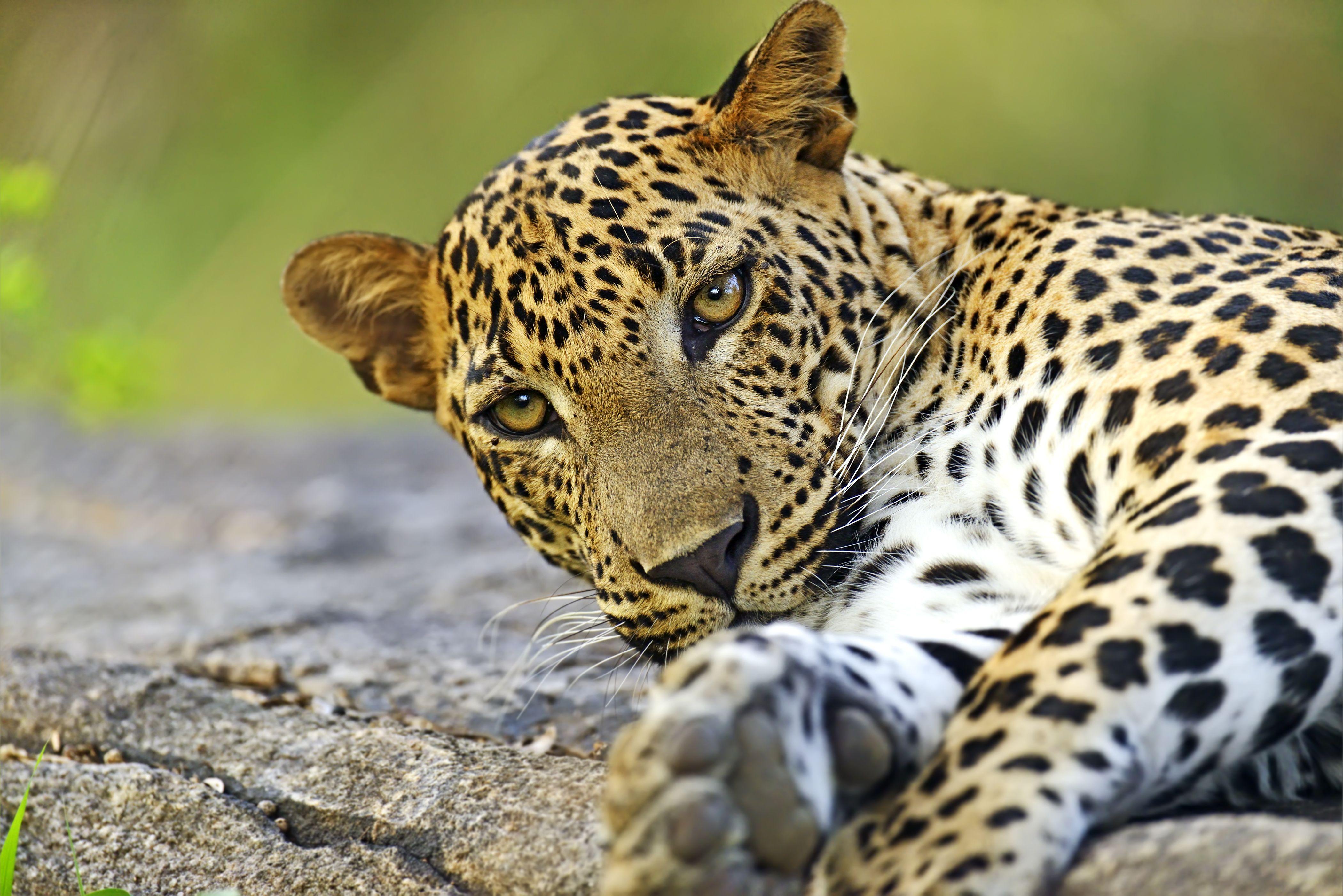Sri Lanka Wildlife Tour This Guided Tour Is A Superb