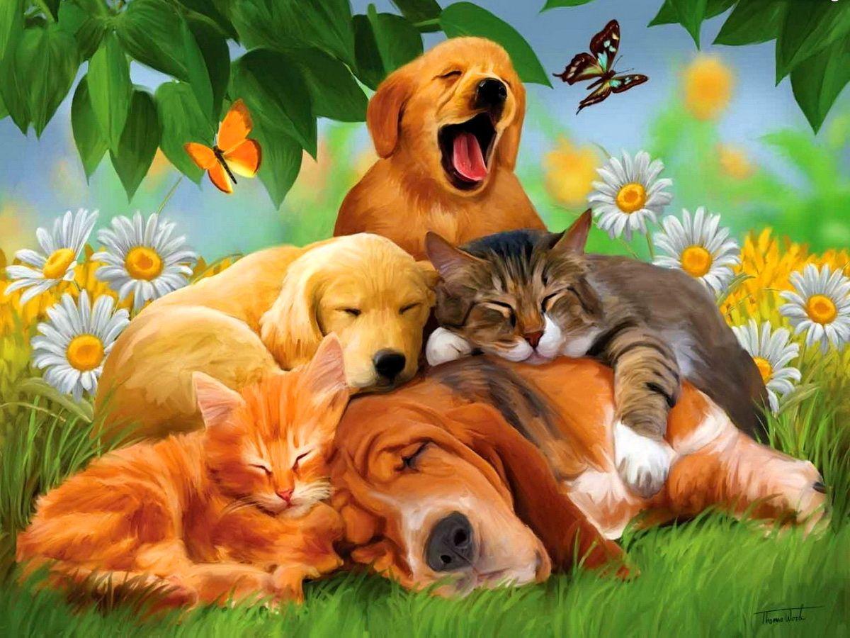 Wallpaper download free image search 3d - Black Lion Wallpaper Animation 3d Photos Pinterest Black Lion And Lions