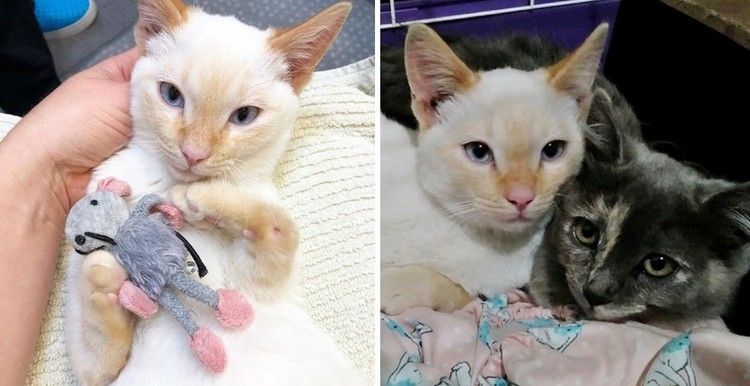 Sibling Kittens Both Born Special Keep Each Other Safe Until Help Arrives Love Meow Kittens Cats Kittens Love Pet