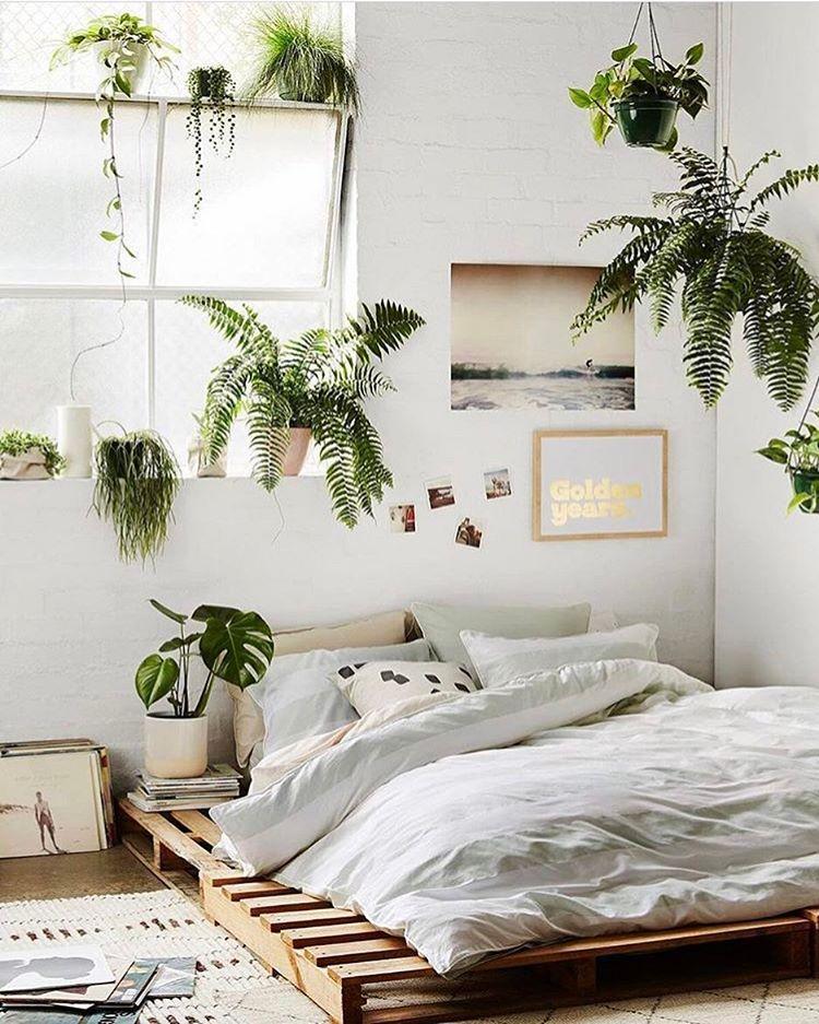 картинки спальни растения пляжа