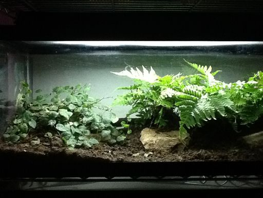 Bioactive Snake Vivarium Set Up Tanked Snake Terrarium Vivarium