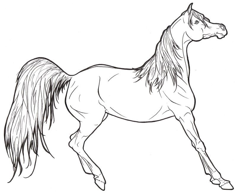 Arabian Horse Lineart By Requay On Deviantart Horse Coloring Books Horse Coloring Horse Coloring Pages