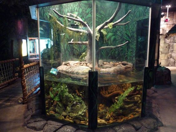 Image Result For Best Amazon Tree Boa Enclosure Carpet Python