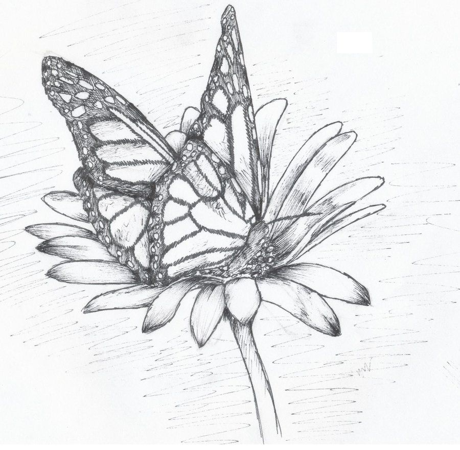 The coloring book of cards and envelopes flowers and butterflies - Coloring Pictures Of Flowers And Butterflies Bing Images