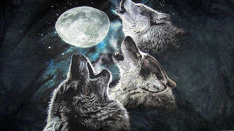 3 Wolf Moon Wallpapers 3 Wolf Moon Wallpapers Wolf Moon Wolf Wolf Wallpaper