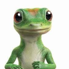 Geico Commercials Google Search Geico Lizard Embrace Pet