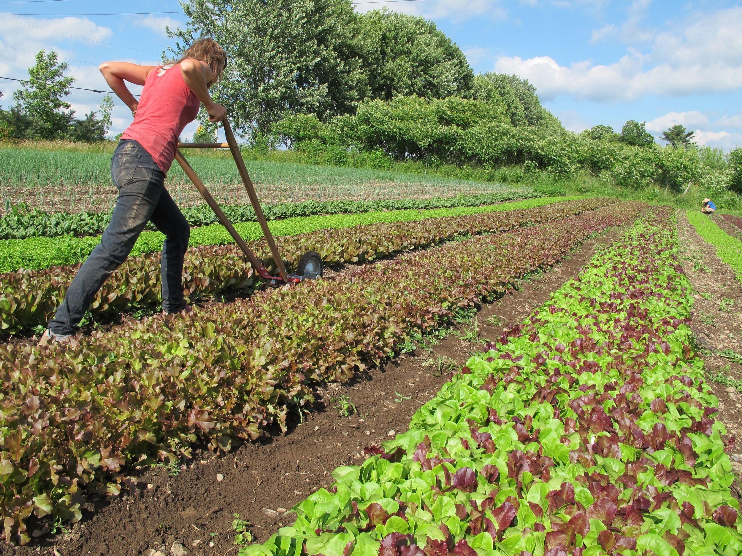 Accueil Homestead Farm Backyard Farming Farm Business Urban backyard farming for profit