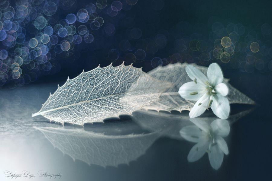 Sentimental love song by Lafugue Logos #xemtvhay