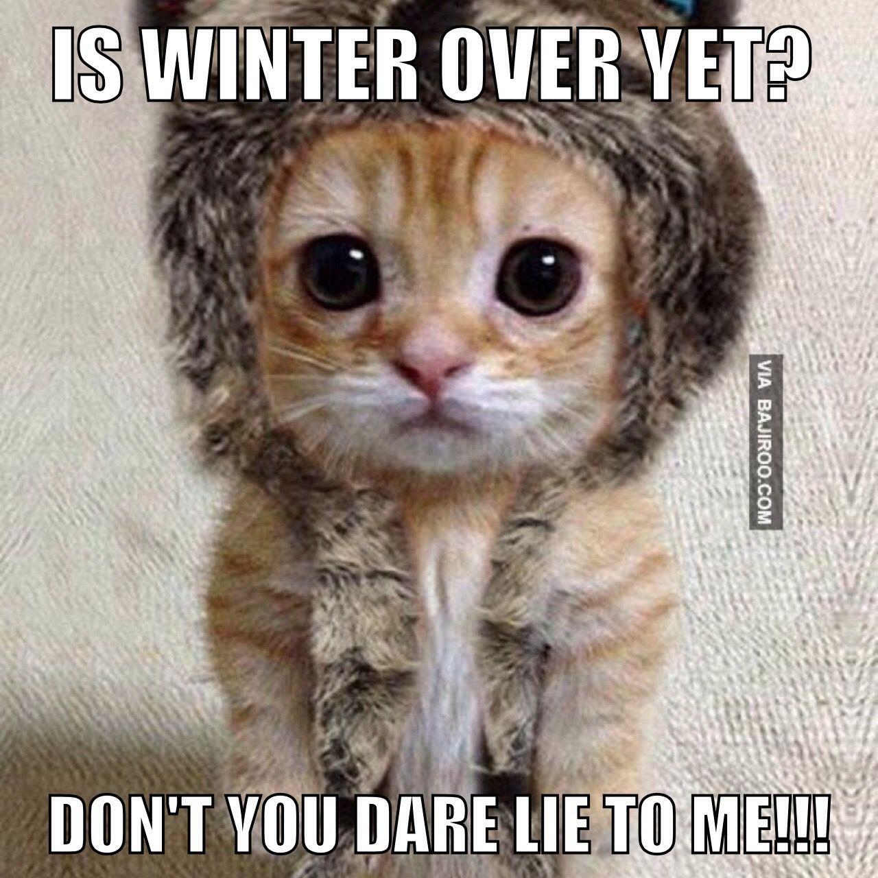 Image result for Is winter over yet?