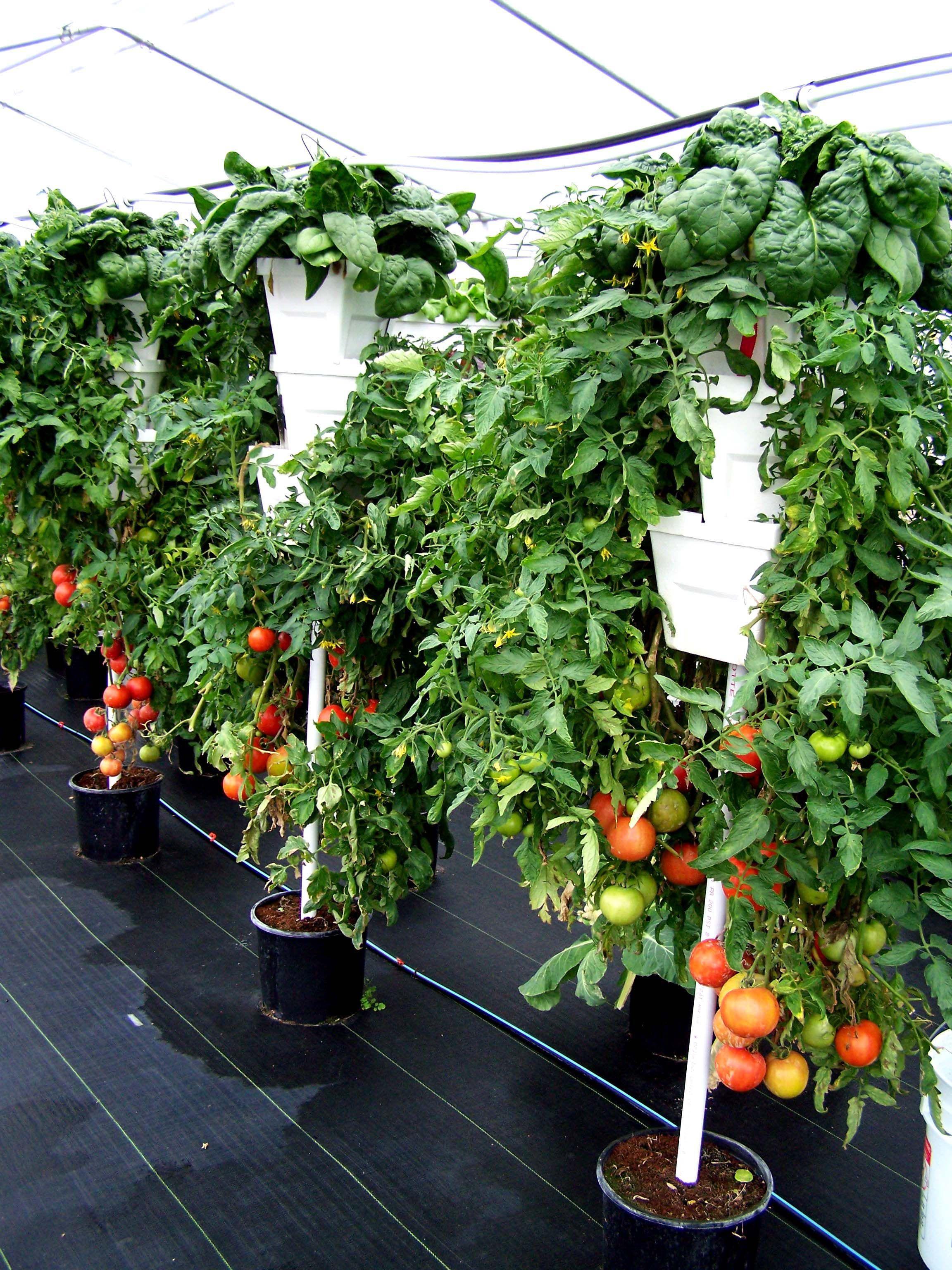 production hors sol la verticale culture verticale pinterest jardinage. Black Bedroom Furniture Sets. Home Design Ideas