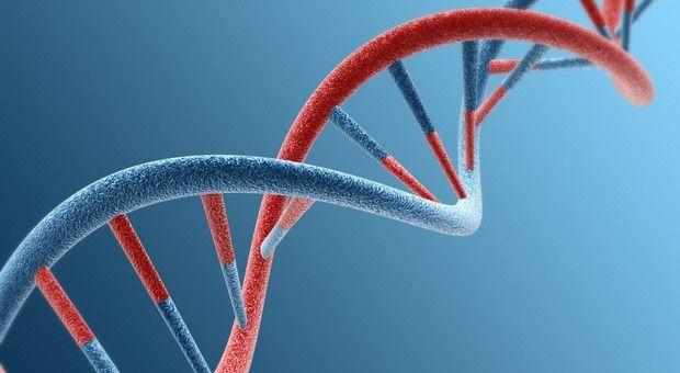 Cette double hélice est de l'ADN. Elle est composée de barreaux qui sont chacun formés de deux éléments chimiques, des «nucléotides». Chaque gène est un morceau d'ADN. (© zhijian Huang/istockphoto)