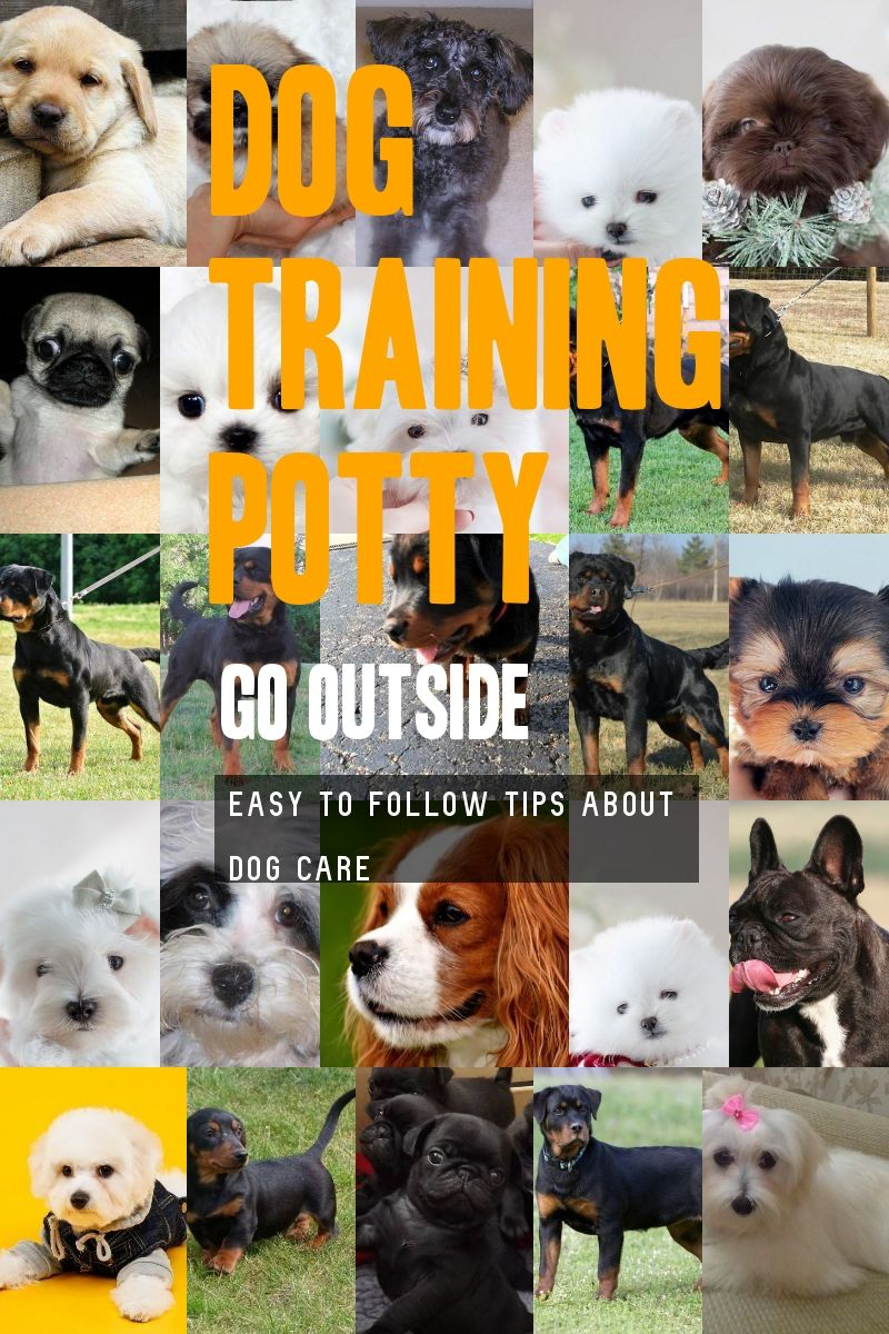 A Few Practical Tips For Dog Training Potty Go Outside You Can Get Additional Details At The Image Link Dog Training Dog Potty Training Basic Dog Training