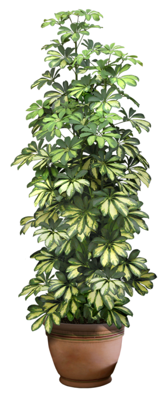 Plante Verte Etc Jardin Pinterest Plantes Vertes