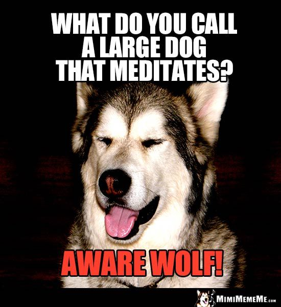 Halloween Dog Joke What Do You Call A Large Dog That Meditates