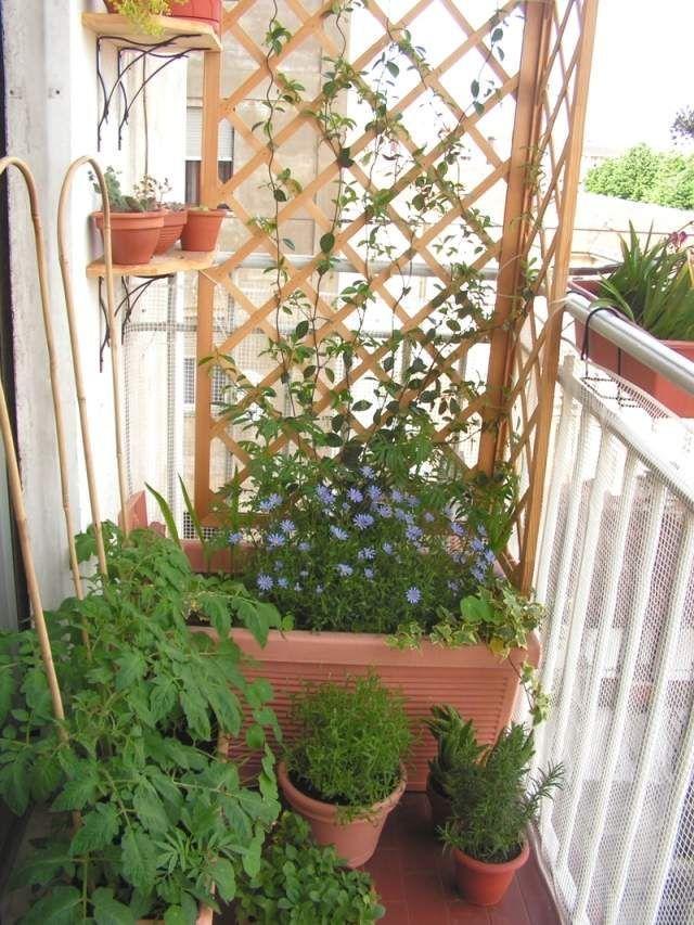 windbreak balcony trellis flower shrubs climbing plants  Jean Bboom -   8 planting Balcony trellis ideas
