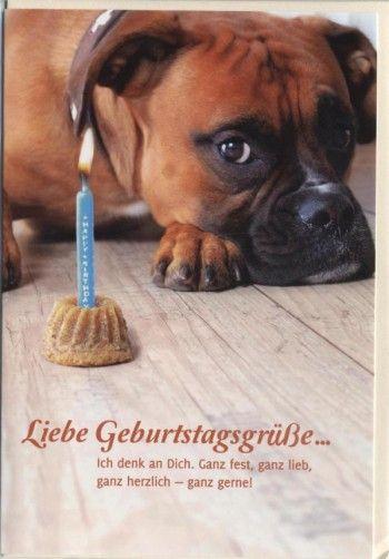 Schöne Geburtstagskarte Liebe Geburtstagsgrüße Hund Und Kuchen