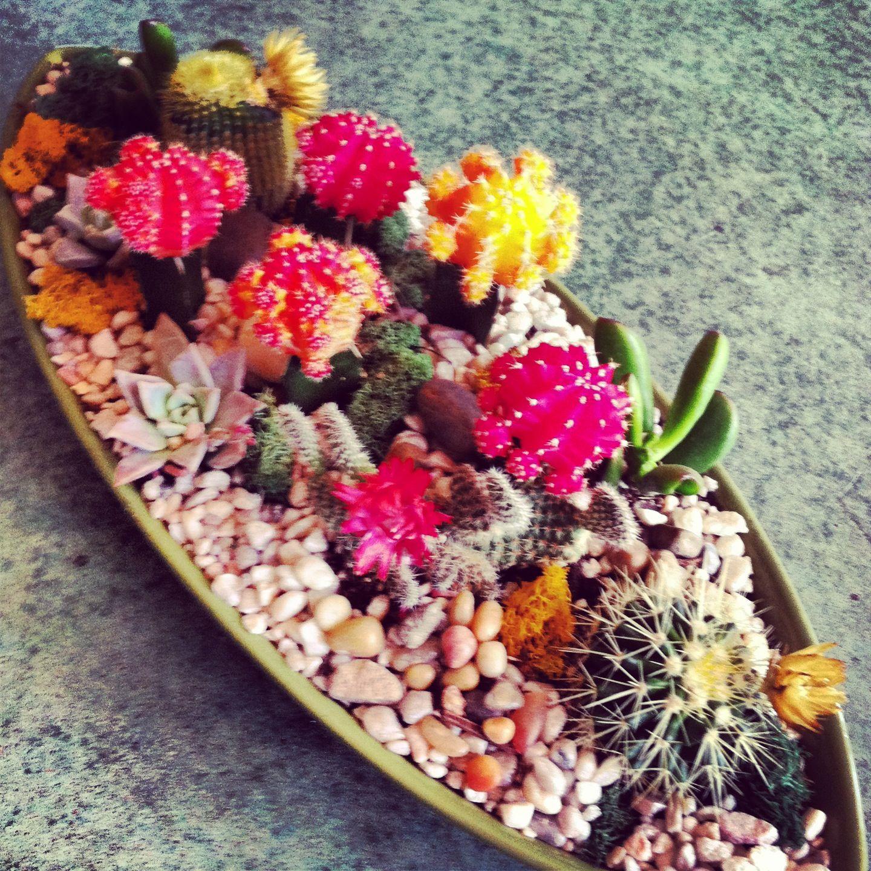 Dish Garden, Succulent Bonsai