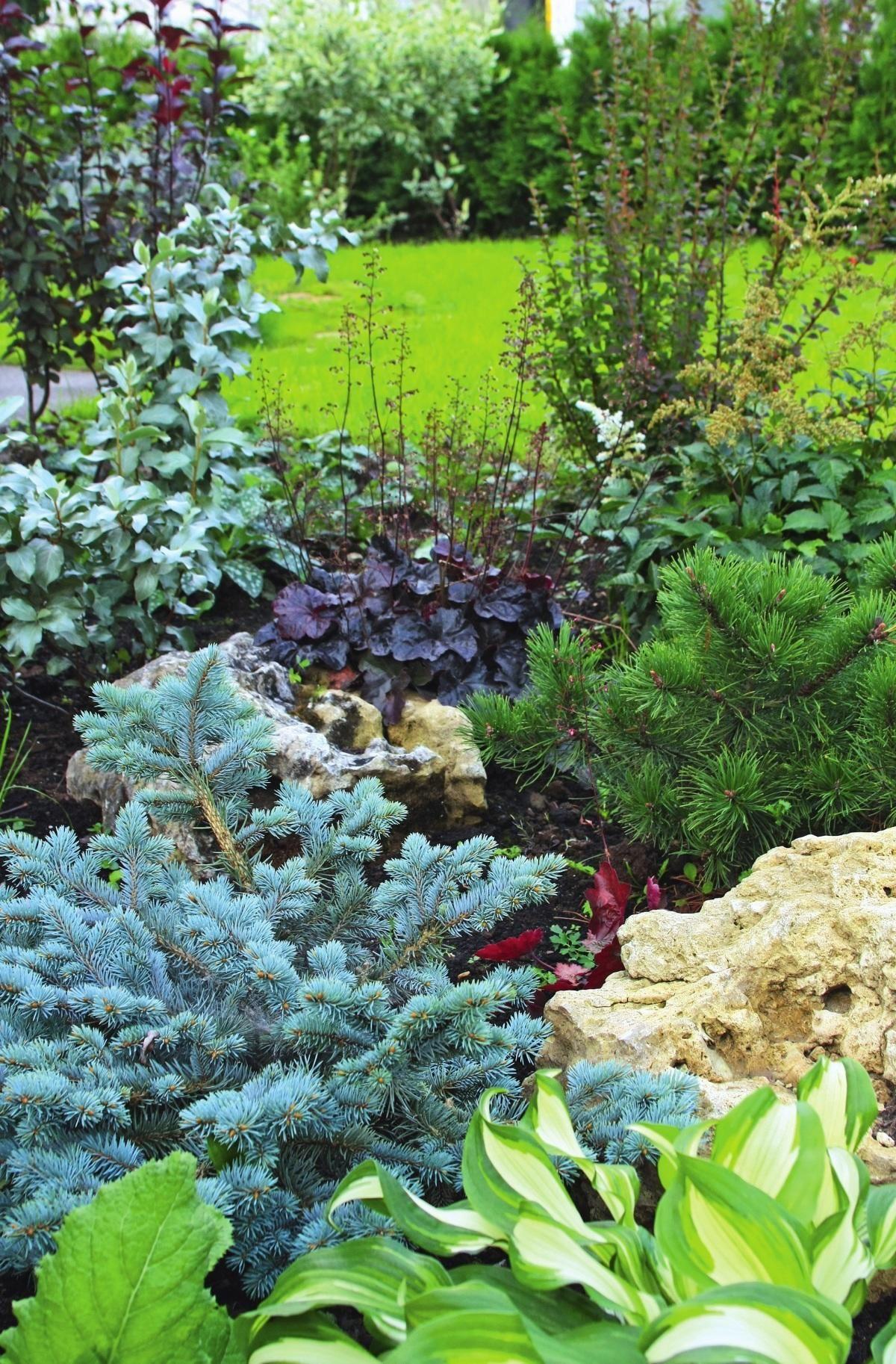 Landscape flower garden  Хвойные растения прекрасно уживаются с хостами и гейхерами  Gardens