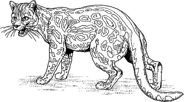 Jaguar Fighting Coloring Pages