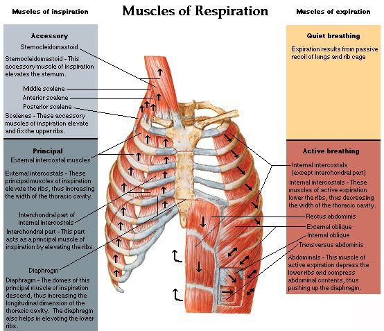pdf Histological