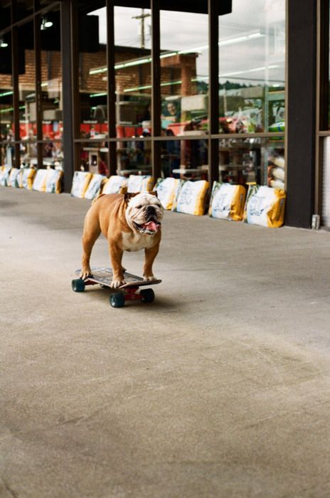 Skater Bully With Images Bulldog Animals Dogs