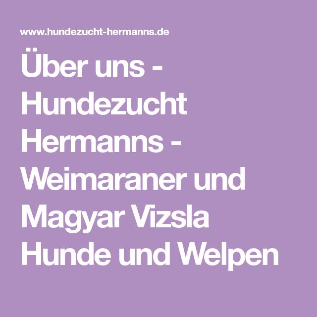 Uber Uns Hundezucht Hermanns Weimaraner Und Magyar Vizsla Hunde Und Welpen Vizsla Hund Welpen Vizsla