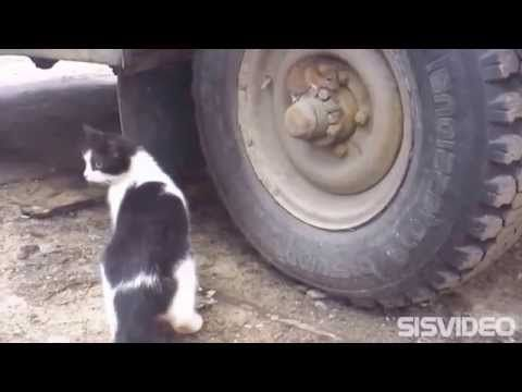 Tom y Jerry en la vida real: Ratón ninja se esconde de un felino. - YouTube