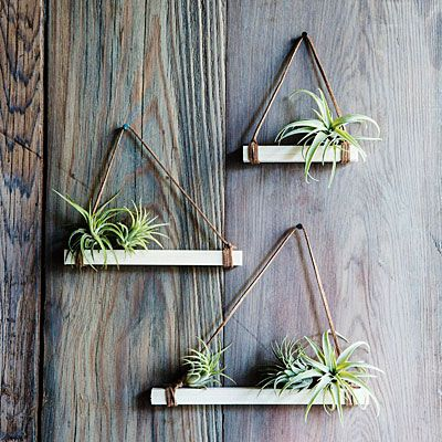 Tillandsia trapezes for easy outdoor decorating #airplants