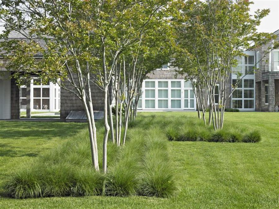 Meerstammige Bomen Landscape Focused Landscape Trees