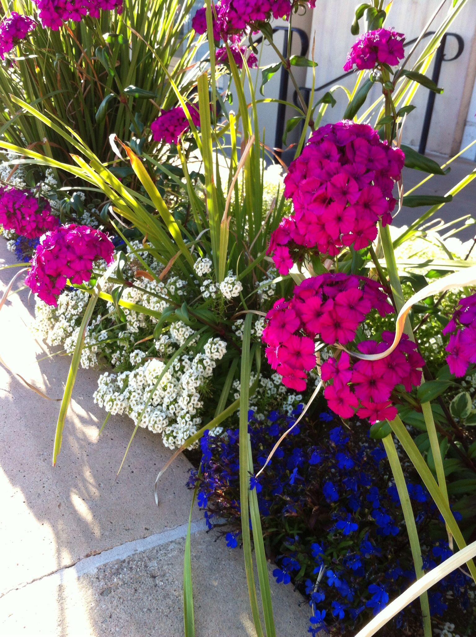 Tucson Winter Flowers La Encantada Flower