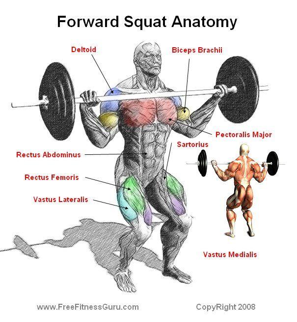 Forward Squat Anatomy Squats Leg Workout Best Leg Workout