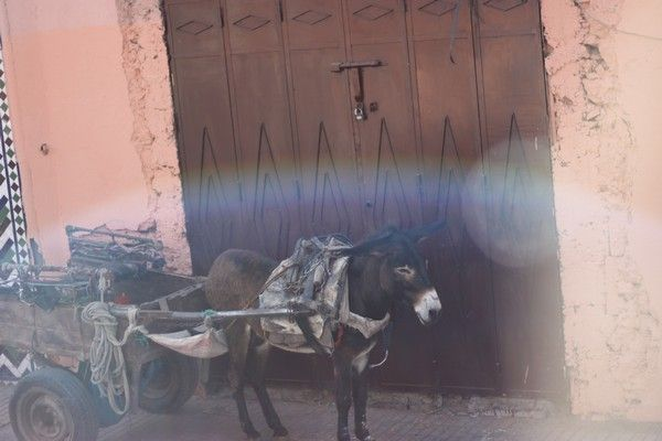 Real Travel: My Holiday in Marrakesh
