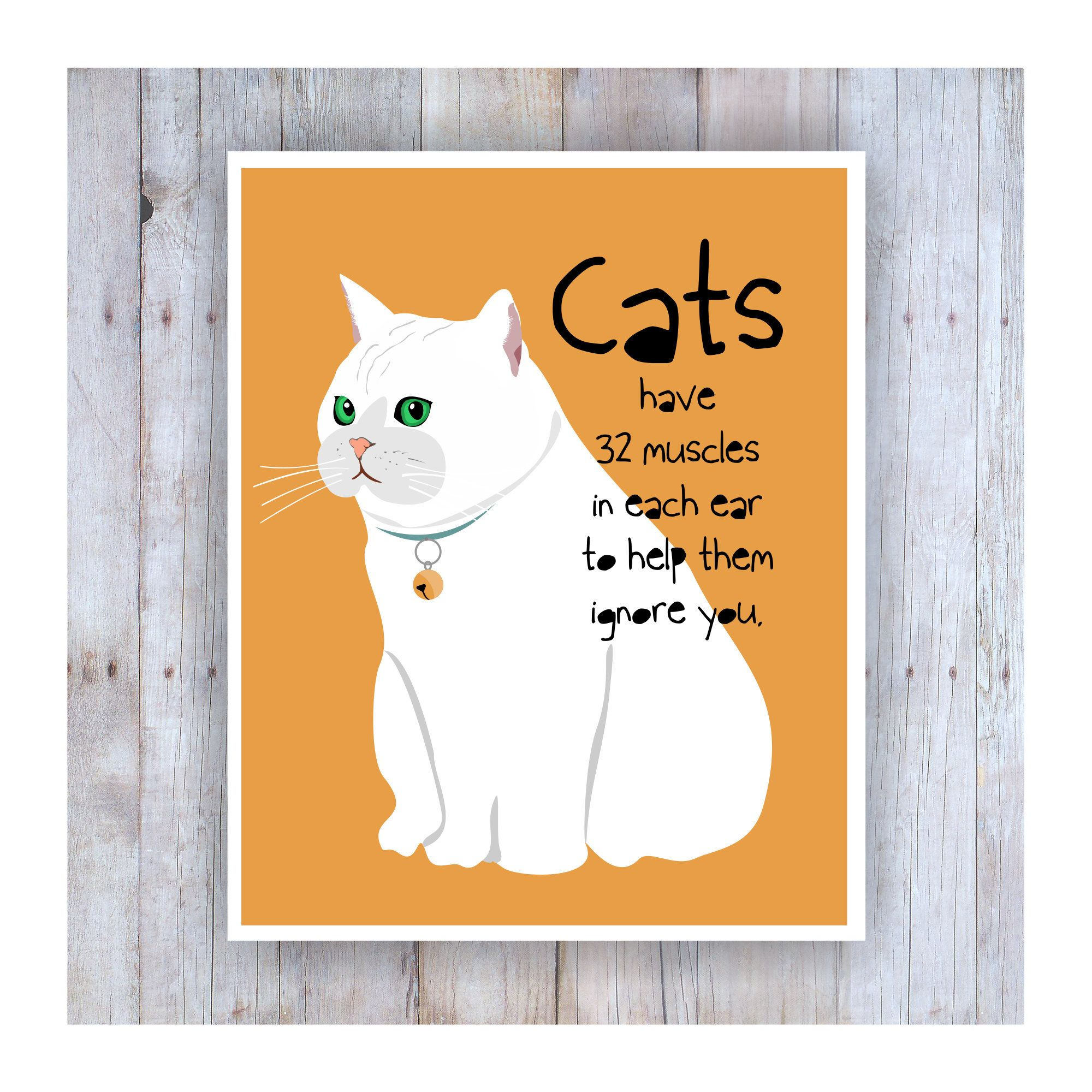 Funny Cat Quote Paper Lantern No.102 funny cat poster librarian gifts