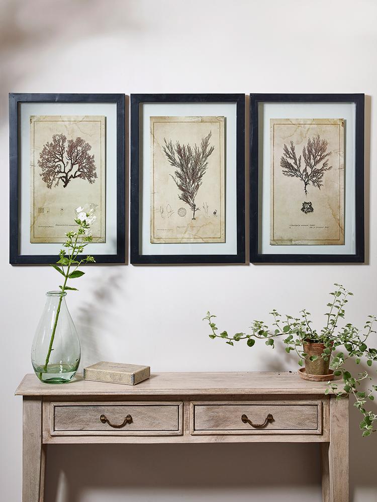 three framed botanical prints marine plants cox cox gift guide