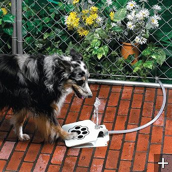 Doggie Water Fountain!!