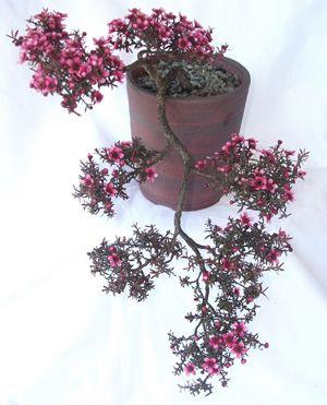 Untitled Document Bonsai Tree Types Flowering Bonsai Tree Bonsai Plants