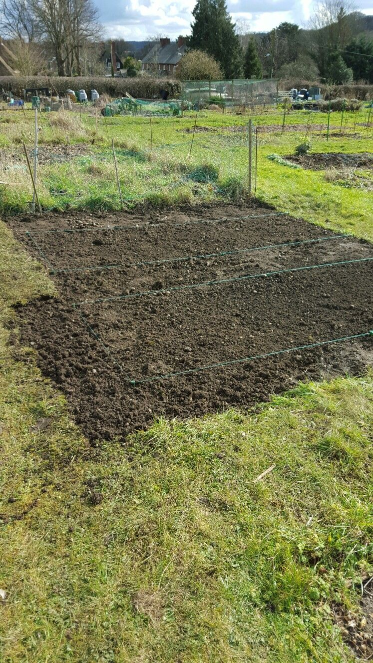How to start a garden to grow your own food and cut flowers. First ...