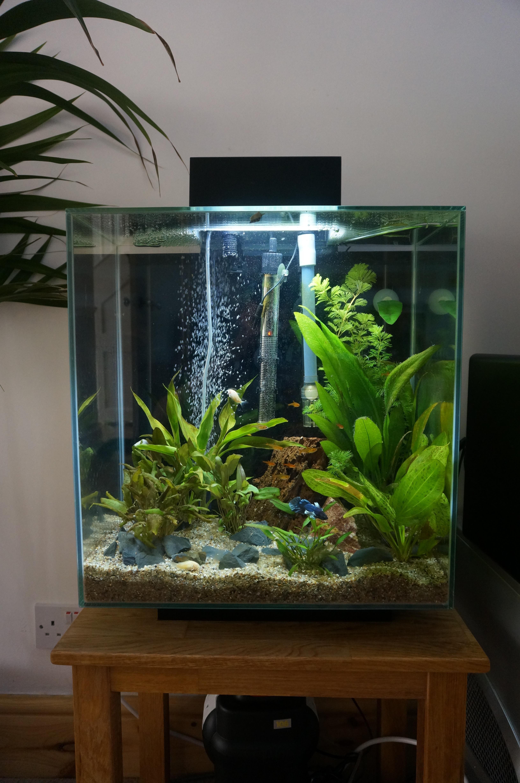 modded fluvel edge pre rescape aquarium aquarium freshwater aquarium und betta fish. Black Bedroom Furniture Sets. Home Design Ideas
