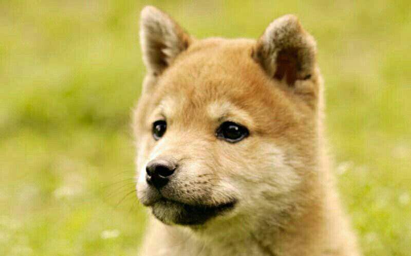 Cachorros      Oso
