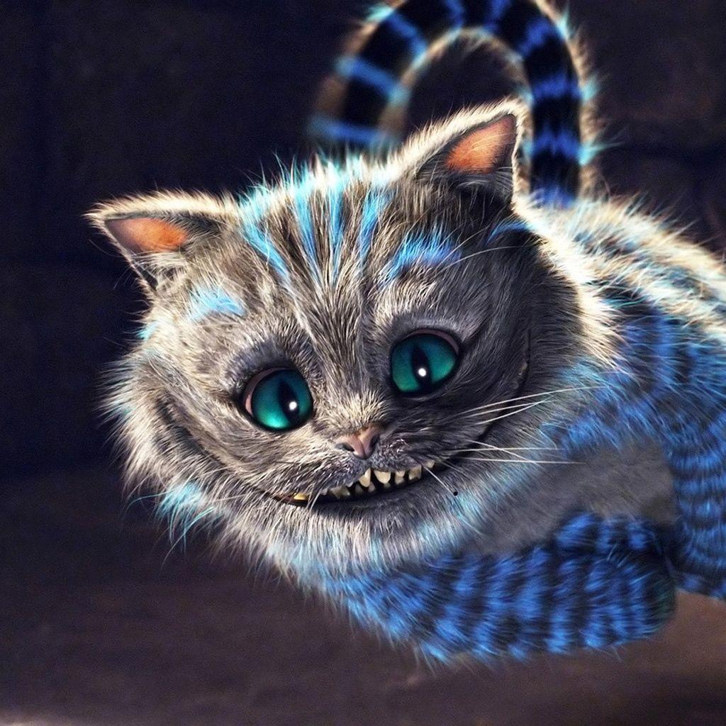Stregatto | Stuff mostly animals in 2019 | Cheshire cat ...
