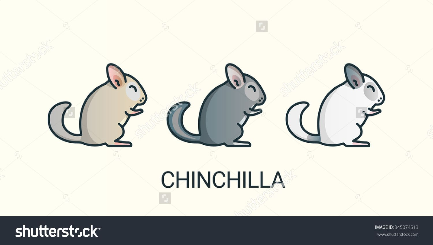 Chinchilla pets icons in flat line trendy style with
