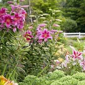 Photo of 24 Hardy Perennials That Will Add Color to Your Garden Year After Year