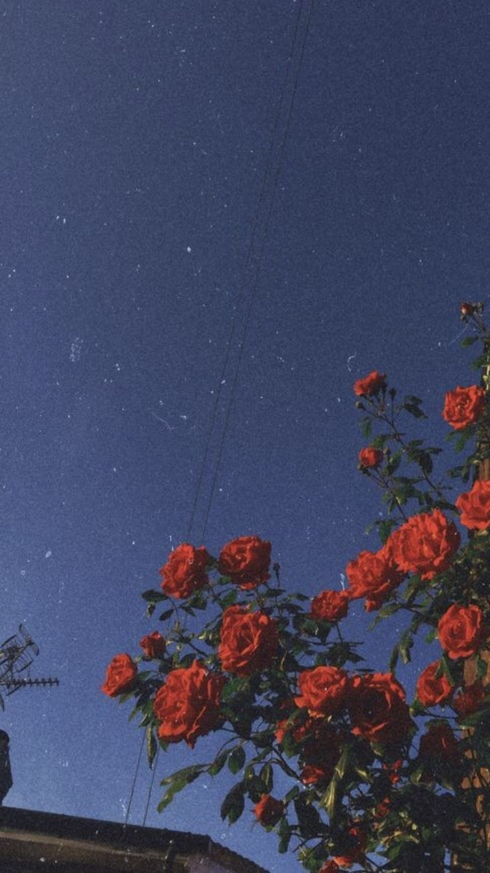 """""""Aus Misserfolgen lernen Sie mehr als aus Erfolg... - #als #Aus #Erfolg #himme #flowersbackgroundiphone"""